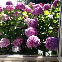 Fleurs d'été