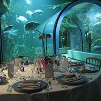 Diner dans le tunnel de l'océarium