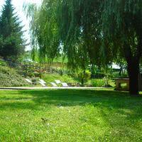 Le parc sous le saule pleureur