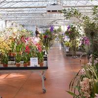 Orchidees Vacherot et Lecoufle