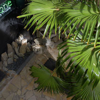 Cyclone le studio - terrasses & jardins