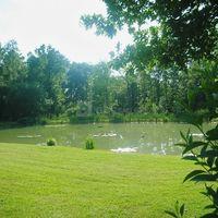 Vue sur l'étang paysagé