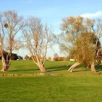 Des arbres centenaires
