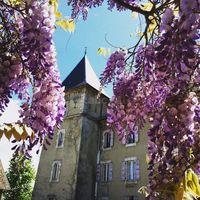 Château - Glycine