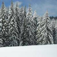 Vosges en hiver