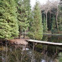 Lac du parc
