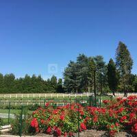 Domaine des roses rouges