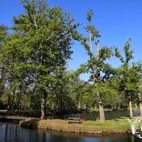 Les étangs de la Palombière